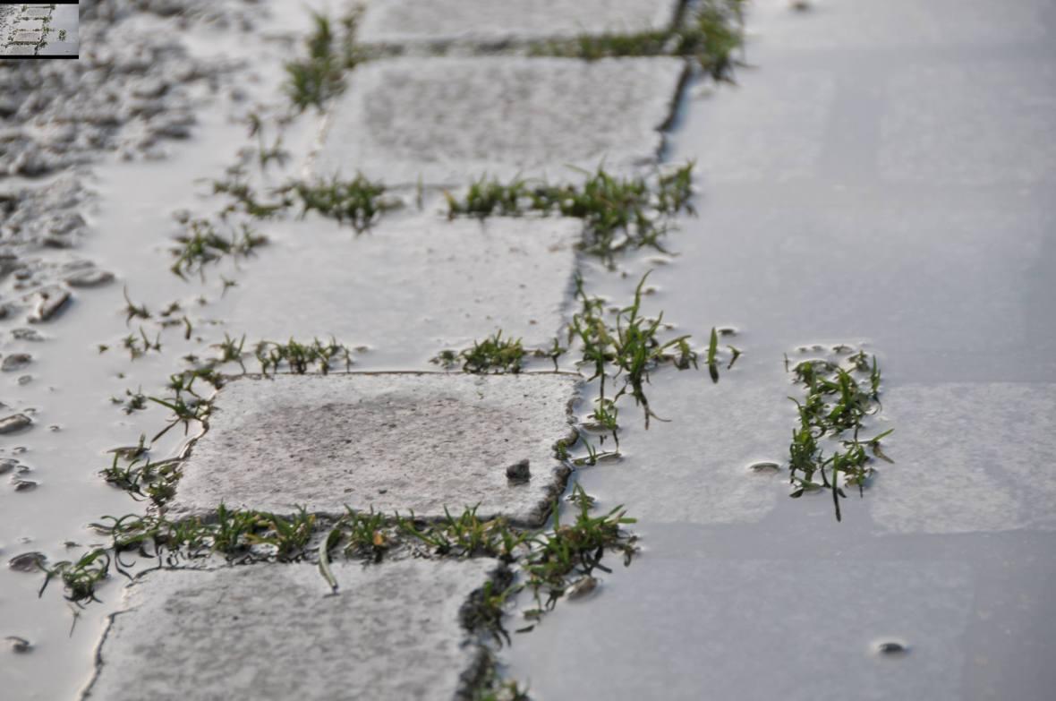 Après la pluie.. Saint-Germain-en-Laye - Avril 2016
